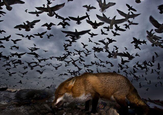 'Kuşlar Uçarken' kategorisinde onur ödülünü kazanan Gabor Kapus'un fotoğrafı