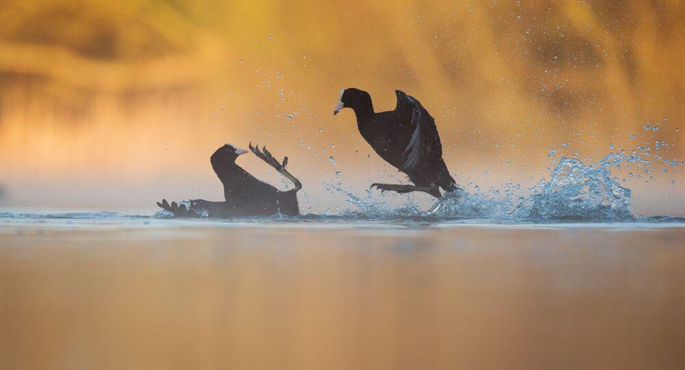 'Kuş Davranışı' kategorisinin ödülünü kazanan Andrew Parkinson'un fotoğrafı