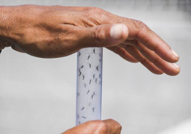 Zika virüsü beyin kanserinin tedavisinde kullanılabilir