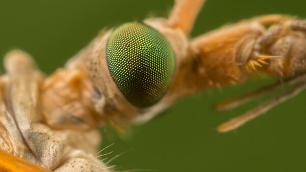 Insect Eye - Sputnik Türkiye