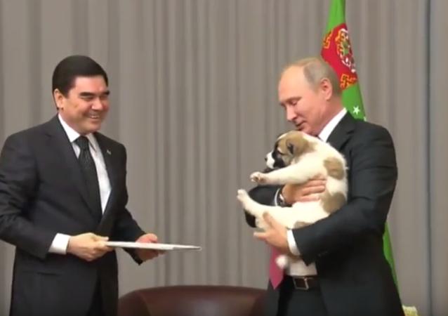 Türkmenistan Devlet Başkanı Gurbanguli Berdimuhamedov, 7 Ekim'de 65. yaşına giren Rusya Devlet Başkanı Vladimir Putin'e yavru bir alabay cinsi köpek hediye etti.