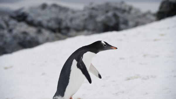 antarktika-penguen-buzul - Sputnik Türkiye