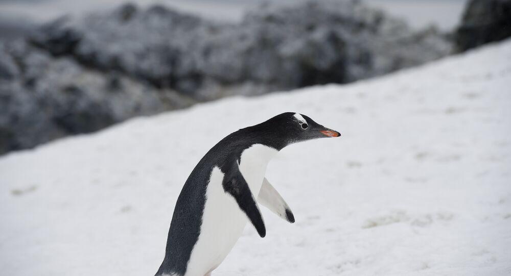 antarktika-penguen-buzul