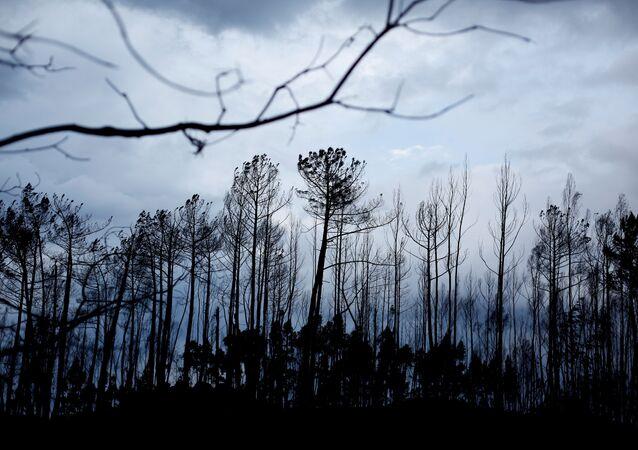 Portekiz- Yangın- Orman