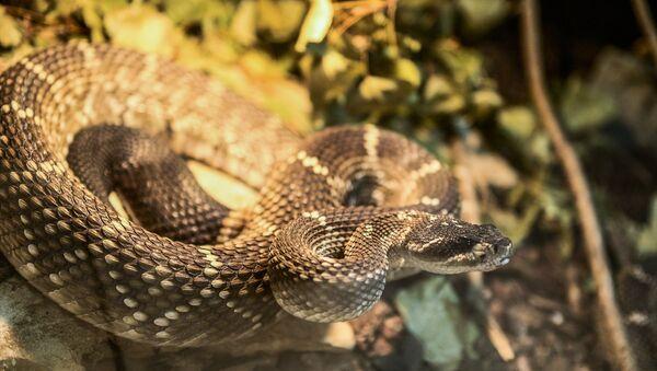 Evinde 40 çeşit yılan besliyor - Sputnik Türkiye