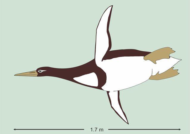 Yeni Zelanda'da insan boyutunda, 55-60 milyon yıllık penguen fosili bulundu