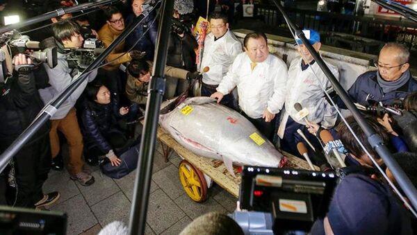 Tarihi Japonya balık hali Tsukiji'da 405 kilogramlık yılın ilk dev orkinosu, 320 bin dolara alıcı buldu - Sputnik Türkiye
