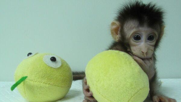 İlk klon primat olan makak maymunu - Sputnik Türkiye