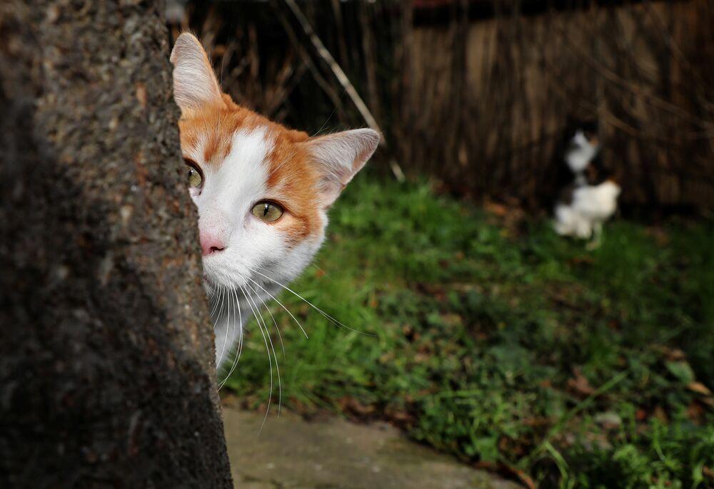 Reuters, İstanbul'un kedilerini fotoğrafladı