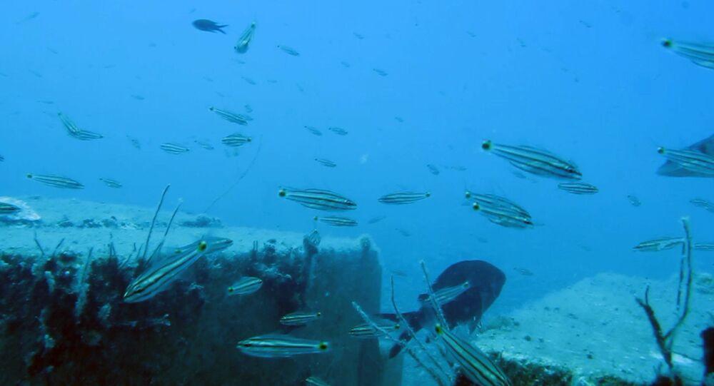 İklim değişikliği nedeniyle Kızıldeniz'den Akdeniz'e geçen 61 balık türü tespit edildi.