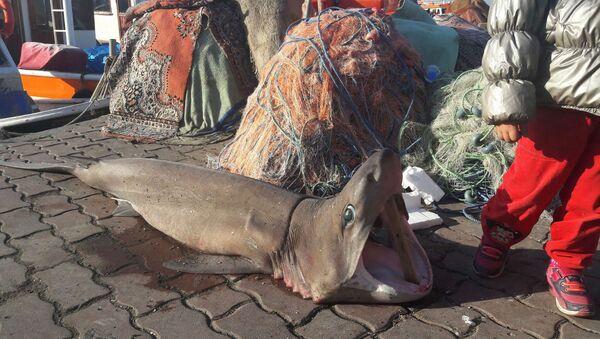 Marmara'da köpek balığı yakalandı - Sputnik Türkiye