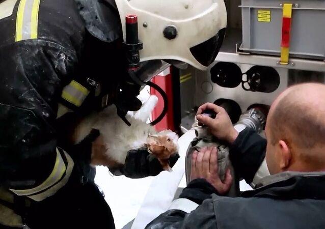 Yangından etkilenen kedi, kalp masajıyla hayata döndürüldü