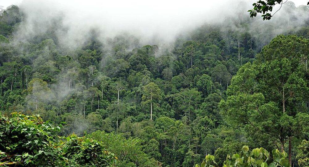 Amazon ormanlarında son 10 yılın en büyük kaybı: 7 bin 900 kilometrekarelik  alan tahrip edildi - Sputnik Türkiye