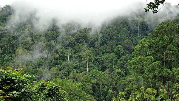 Amazon yağmur ormanları - Sputnik Türkiye