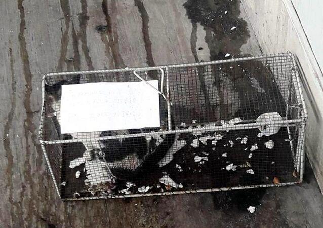 Market, sucuk 'çalan' kediyi kafese hapsetti