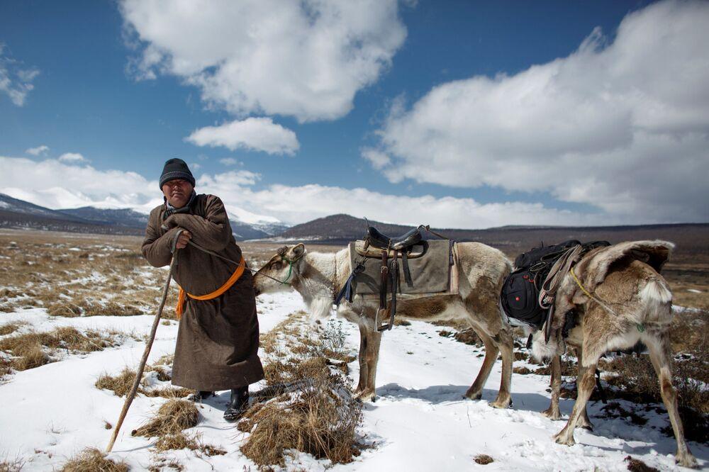 Moğolistan'da ren geyiği çobanları