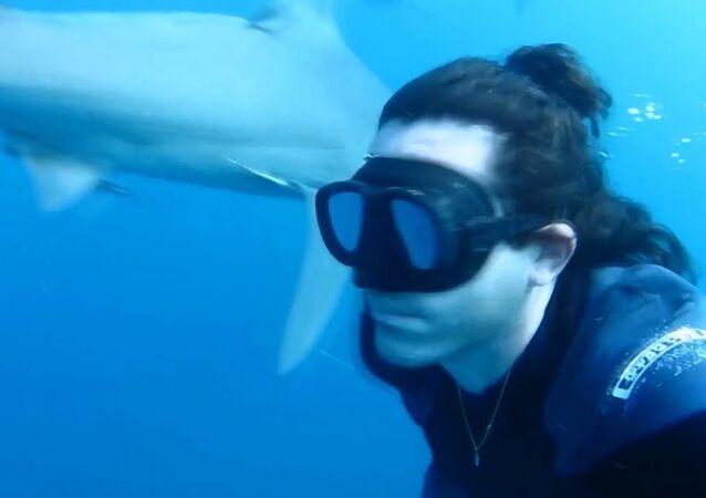 Serbest dalgıçtan yürekleri ağza getiren köpekbalıklarıyla dans