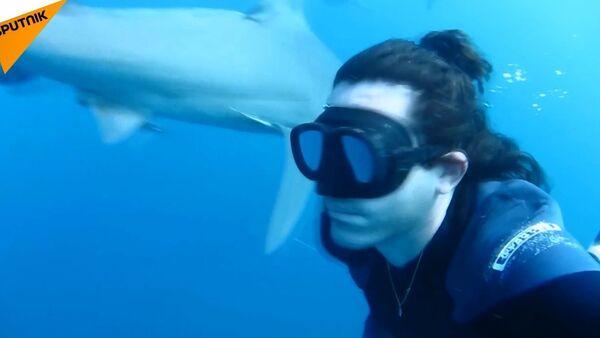 Serbest dalgıçtan yürekleri ağza getiren köpekbalıklarıyla dans - Sputnik Türkiye