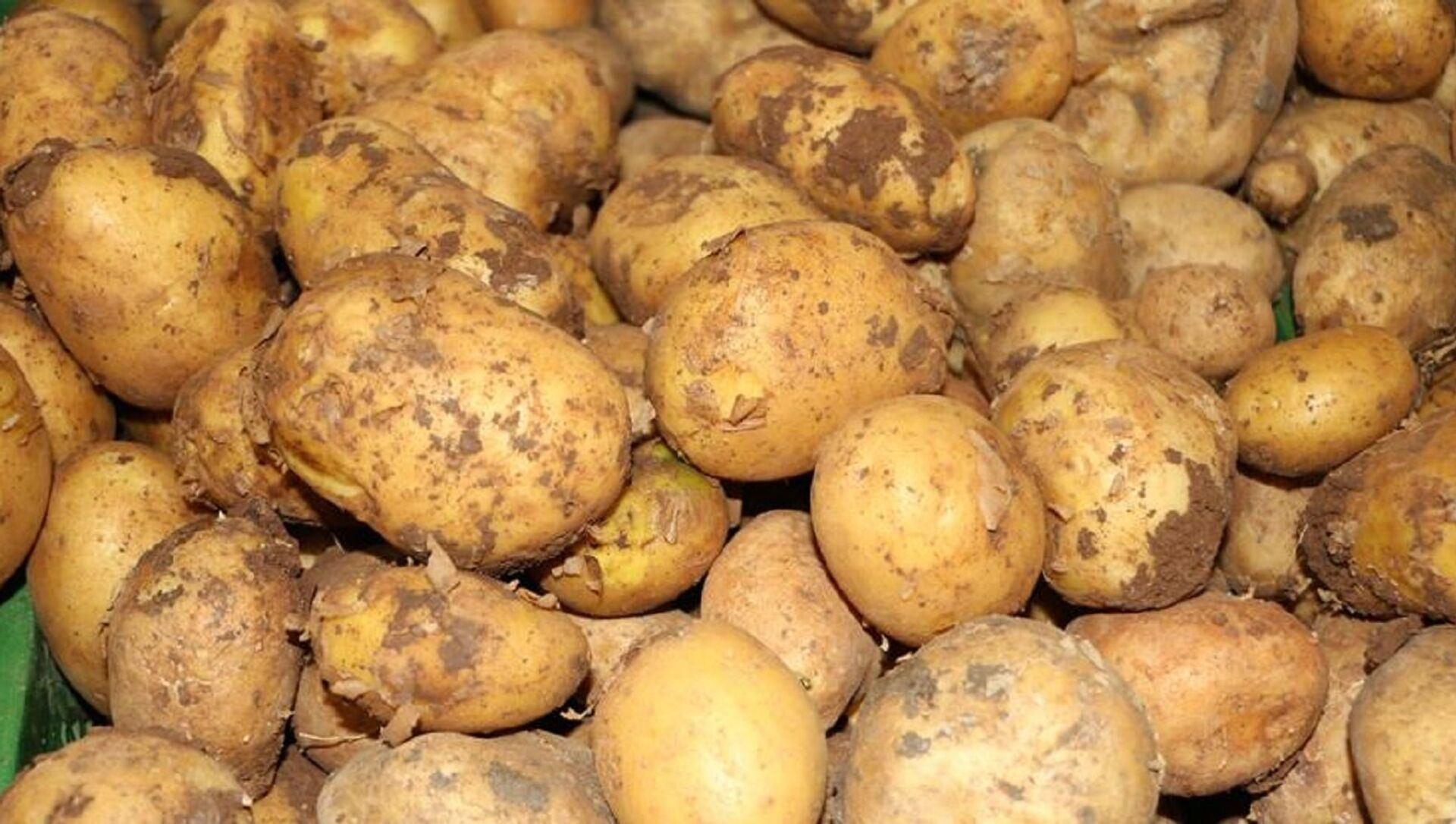 Patates - Sputnik Türkiye, 1920, 14.04.2021