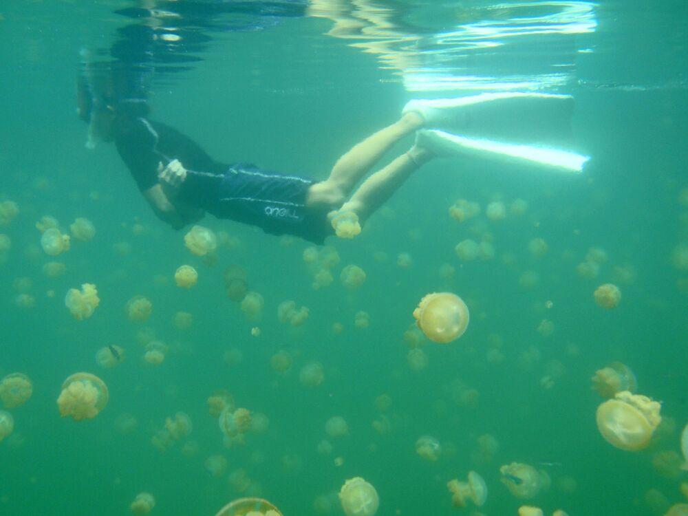 Palau'da denizanası gölü