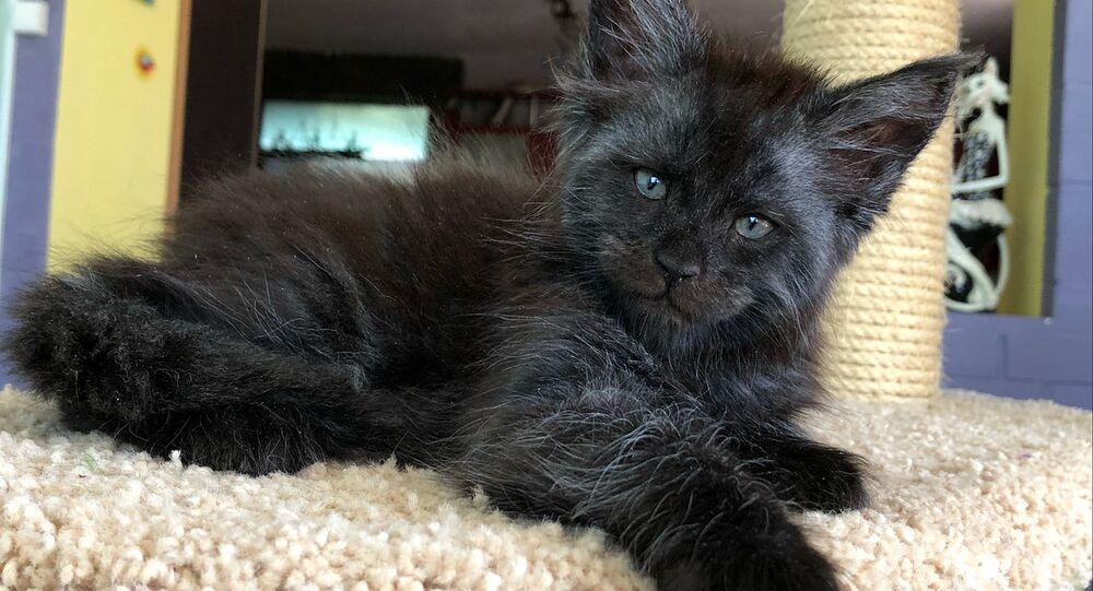 İnsan yüzlü kedi sosyal medyayı karıştırdı