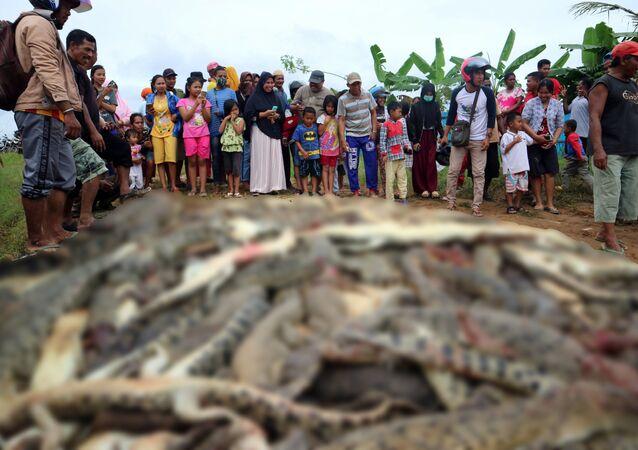 Endonezya'da katledilen timsahlar