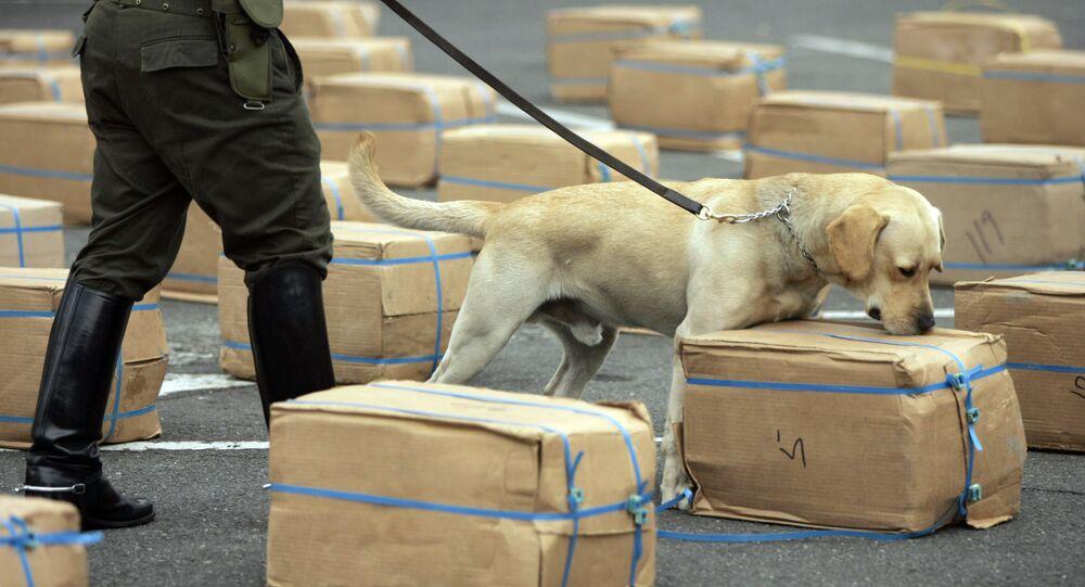 Kolombiya polis köpeği