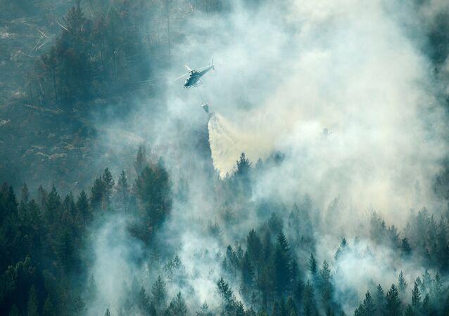 İsveç'te orman yangını