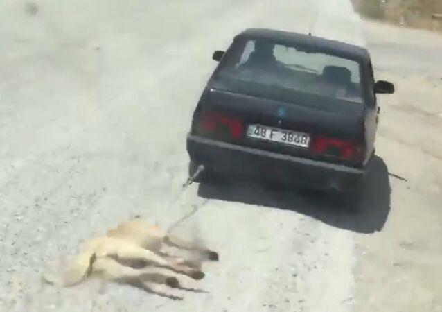 Muğla'da köpeği aracının arkasına bağlayan kişi gözaltına alındı