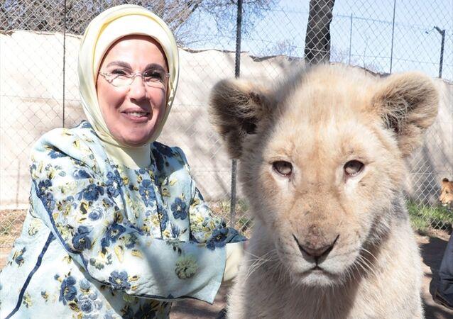 Emine Erdoğan yavru aslanla poz verdi