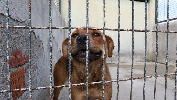 Sahibinin şiddet uyguladığı köpek koruma altına alındı - Sputnik Türkiye