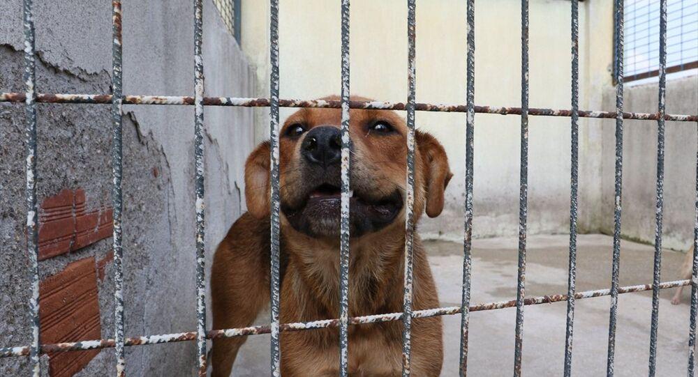 Sahibinin şiddet uyguladığı köpek koruma altına alındı
