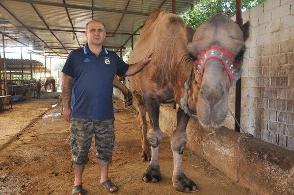 Kurbanlık develeri en çok Suriyeliler tercih ediyor - Sputnik Türkiye