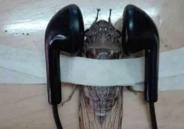 Öğretmenin paylaştığı bantlanmış ağustos böceği fotoğrafı tepki çekti