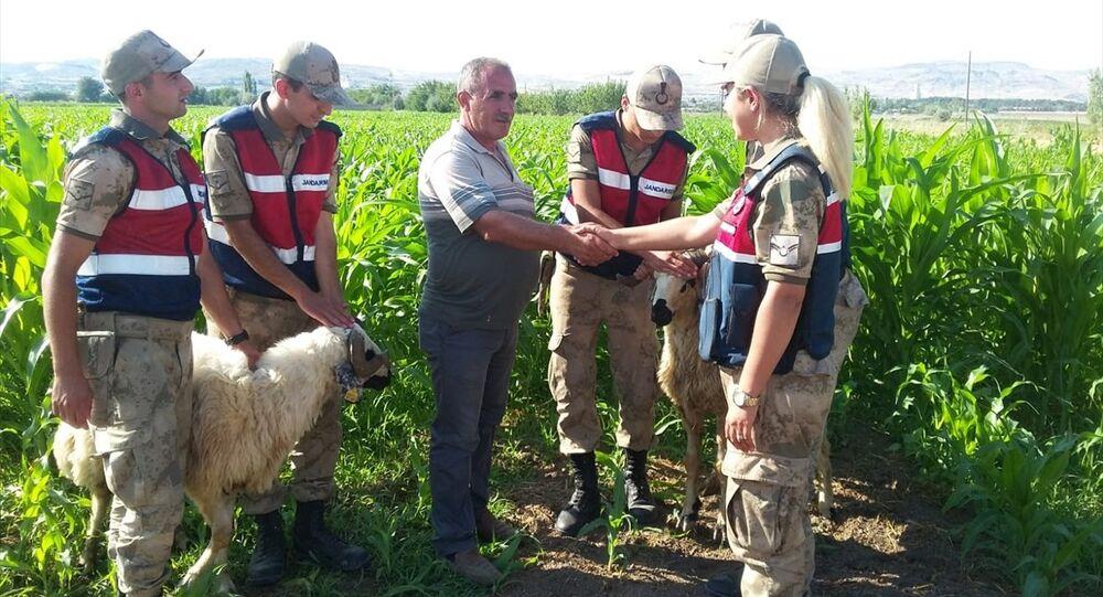 Kaçak kurbanlıklar Drone yardımıyla bulundu