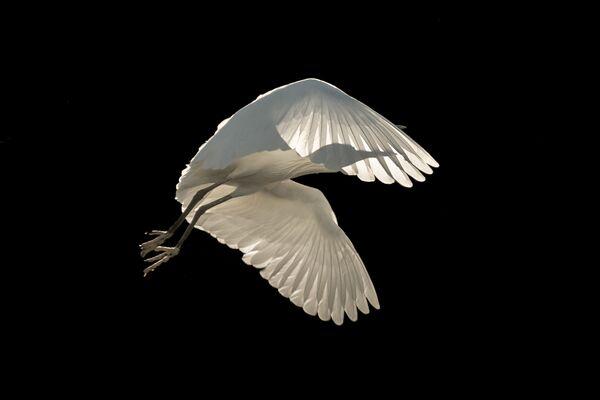 2018 Yılının En İyi Kuş Fotoğrafçısı Yarışması'nın kazananları - Sputnik Türkiye
