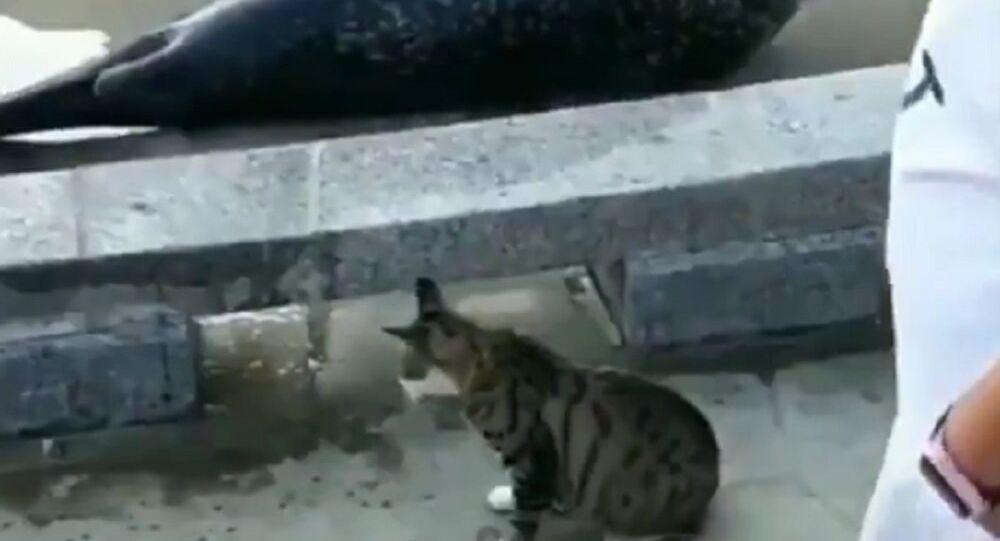 Kedi ve saldırıya uğrayan fok balığı