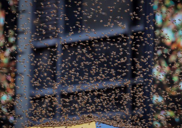 New York'ta bulunan bir sosisli sandviç arabası binlerce arının istilasına uğradı