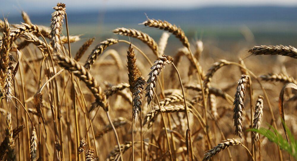 Tahıl