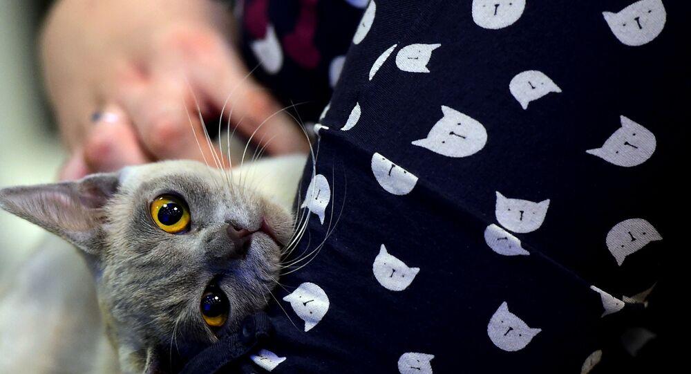 sahibi tarafından sevilen kedi