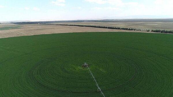 Hazine, tarım, arazi - Sputnik Türkiye