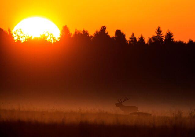 Belarus'ta sonbahar
