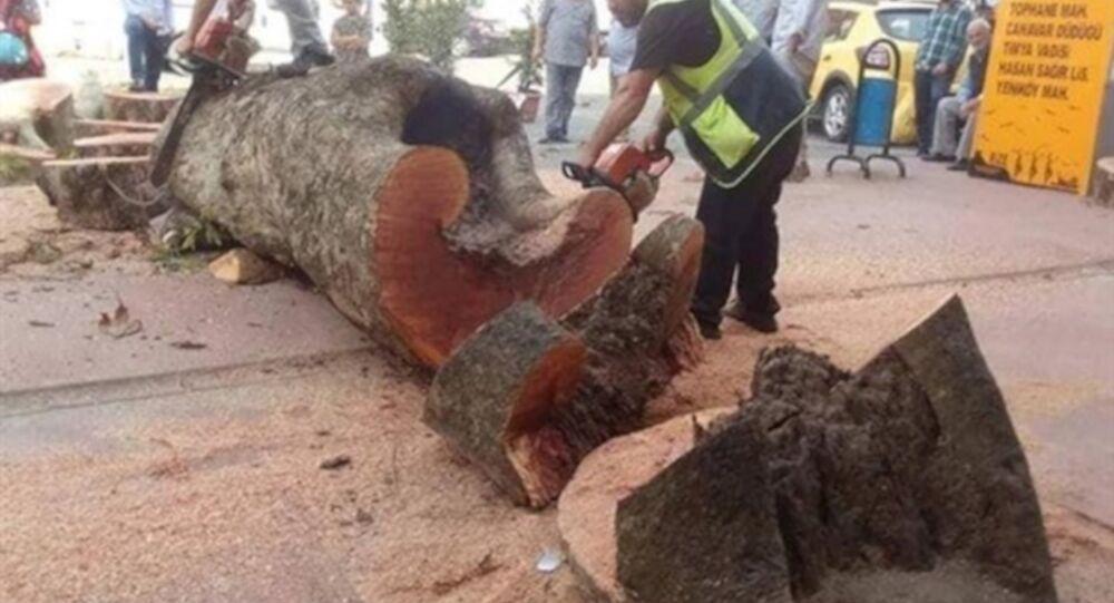 Rize'de kesilen asırlık çınar ağacının haberini yapan gazeteciye soruşturma