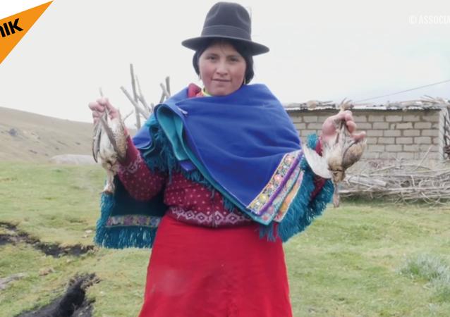 Ekvador'da gizemli 'toplu kuş intiharları'