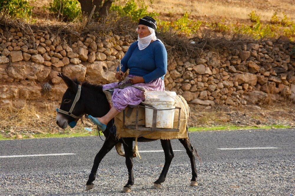 Diyarbakır ve Mardin köylerinde bağbozumu