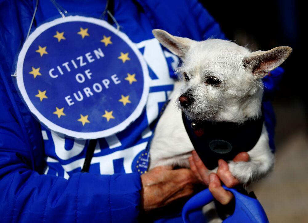 'Havhavarandum' organizatörleri AB'den ayrılmanın veteriner sayısında azalışa, seyahat olanaklarını kısıtlayacağına ve köpek mamalarının fiyatında yükselişe neden olacağını ve bu nedenle de hayvan dostlarının Brexit'ten olumsuz etkileneceğini savunuyor.