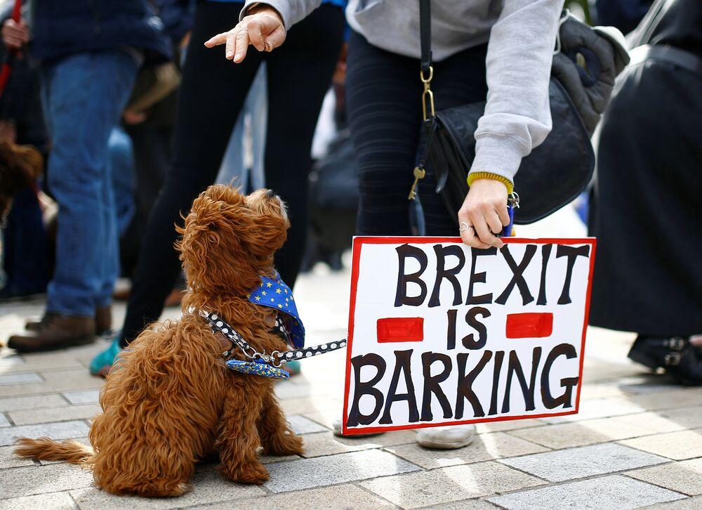 Yürüyüş, nihai Brexit anlaşması hakkında yeni bir halk oylaması yapılmasını isteyen 'People's Vote' (Halkın Oyu) adlı inisiyatif çerçevesinde yapıldı. Bahsi geçen inisiyatif nisan ayında 4 İngiliz milletvekili ve ünlü aktör Sir Patrick Stewart tarafından kurulmuştu.