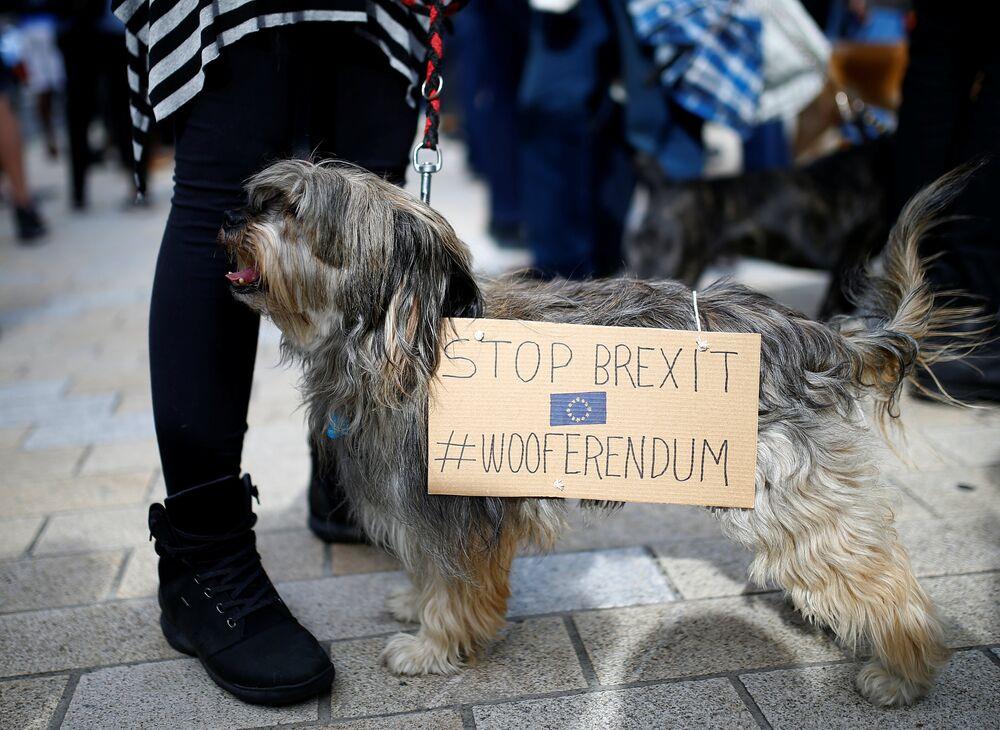 İngiltere Başbakanı Theresa May ise Brexit konusunda yeni halk oylamasına karşı çıkmış, bunun 2016'daki referandumun sonucuna ihanet olacağını ve siyasilere olan güveni yok edeceğini savunmuştu. Ancak ülkedeki neredeyse bütün siyasi partilerden bazı politikacılar İngiltere halkının fikrinin değişmiş olabileceğini belirterek yeni bir halk oylaması istiyor