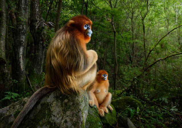 Yılın Vahşi Yaşam Fotoğrafçısı Yarışması kazananları
