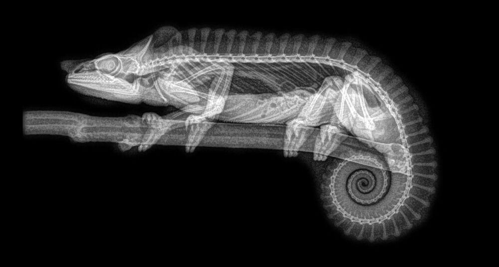 Hayvanların X-Ray Görüntüleri